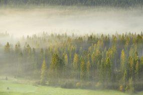 Slezské Beskydy – Lesy pod Ochodzitou