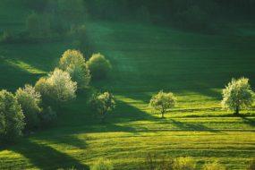Moravskoslezské Beskydy – Jarní pole pod Ostrým