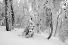 Tančícím lesem