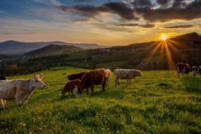 Nýdecké pastviny