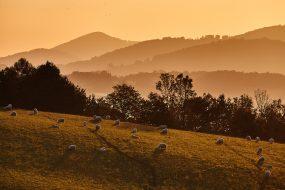 Moravskoslezské Beskydy – Pastviny pod Prašivou